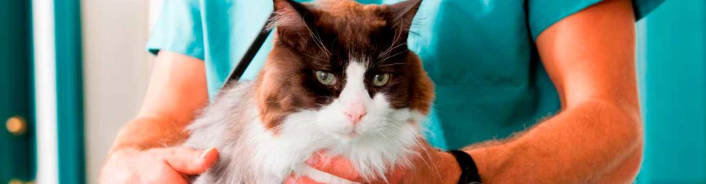 chequeo-gatos-blog