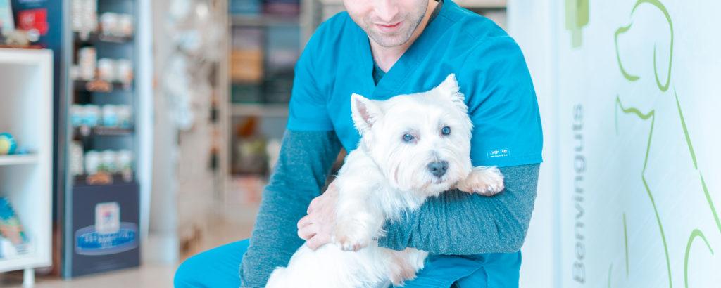 esterilitazacio-gos-veterinari