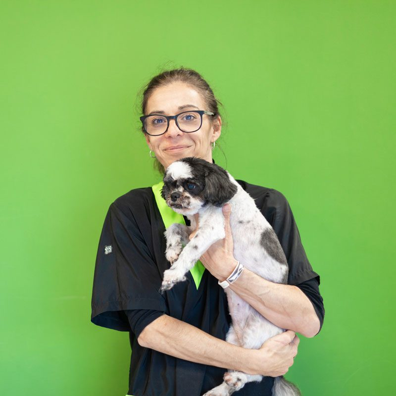 auxiliar-veterinaria-perro