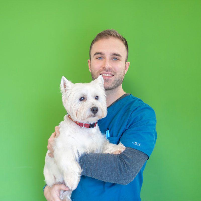 auxiliar-veterinario-perro
