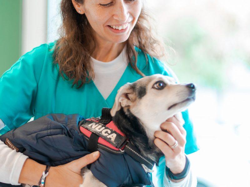 esterilitzacio-gossa-veterinari
