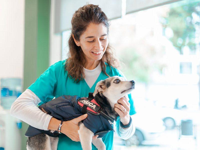 esterilitzacio-gosses-veterinari