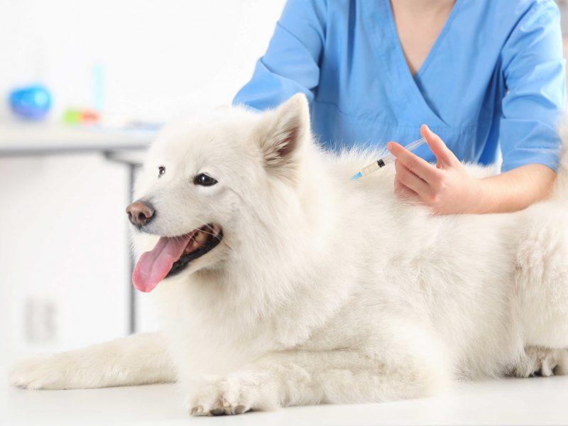 medicina-interna-preventiva-mascotas
