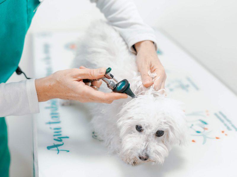 revisio gos a veterinari esplugues