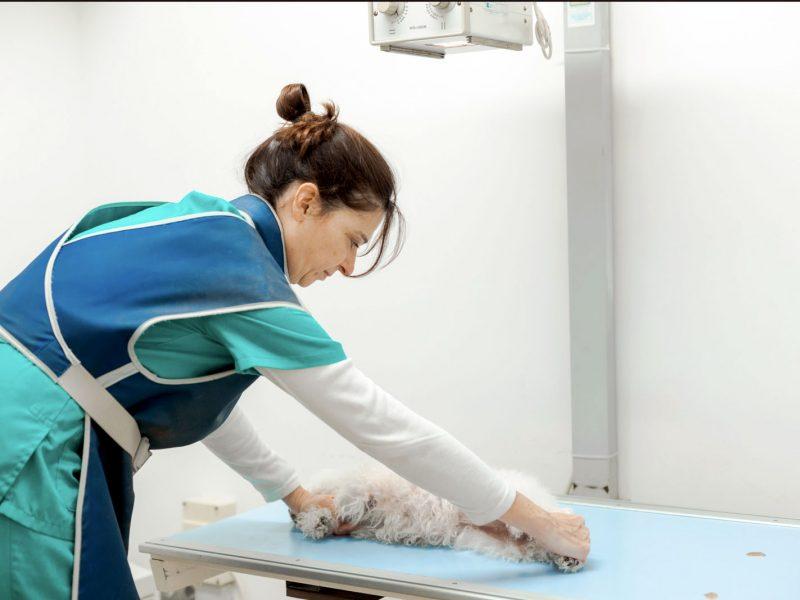 rayosx-veterinaris